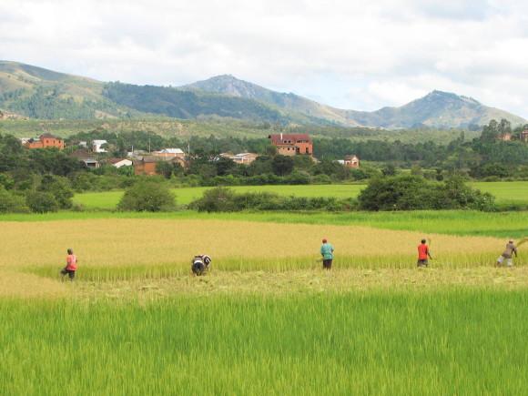 RiceMadagascar
